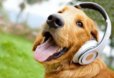 如何应对雅思取消听力录音样例?